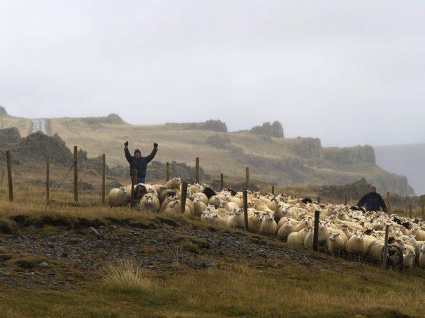 Matarauður Íslands
